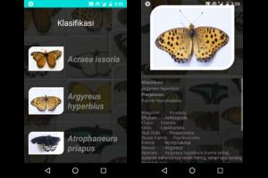 klasifikasi kupu-kupu